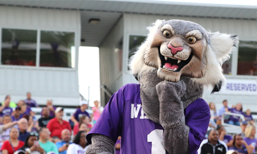 willy the wildcat at a football game